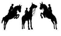 Esclarecimento - Carta recebida - Convocação Jovens Cavaleiros